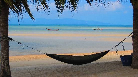 hammock-on-the-beach.jpg