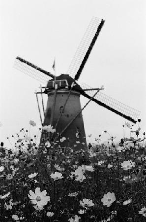 Sakura Furusato Square: オランダ風車リーフデ