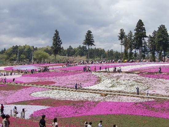 Chichibu, Japonia: 思わずため息