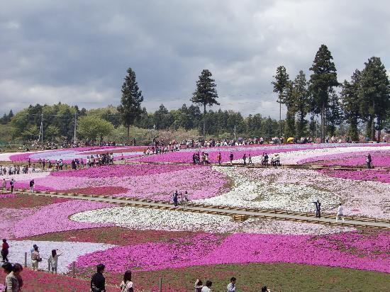 Chichibu, Japan: 思わずため息