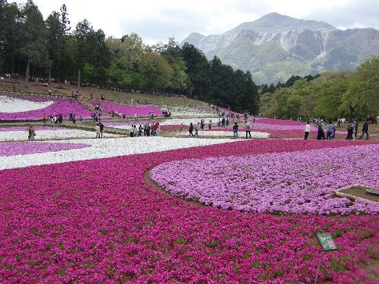 Chichibu, Japan: 武甲山とのコントラスト