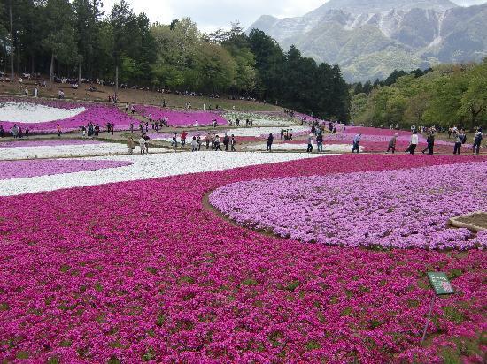 Hitsujiyama Park: 癒されます。