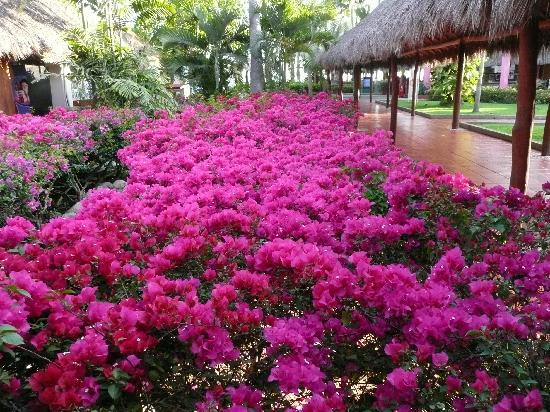 Meliá Puerto Vallarta All Inclusive: grounds