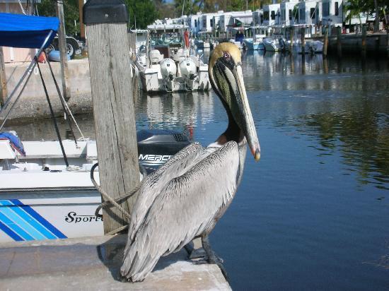 Big Pine Key Boat Rentals: At the Big Pine Key Boat Rental