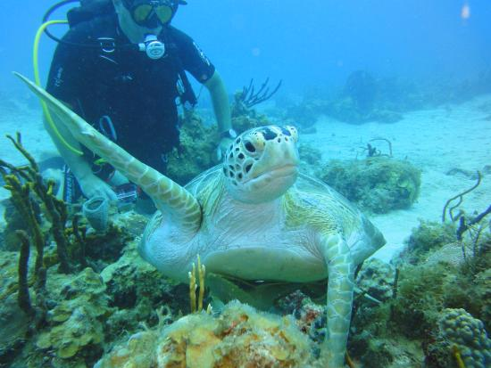 Aqua Marine Dive Center: friends for live