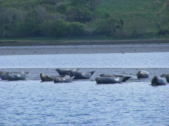 Donegal Bay Waterbus: Seal Colony