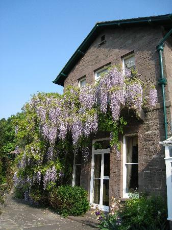 Gliffaes Country House Hotel: Beautiful wisteria on the terrace