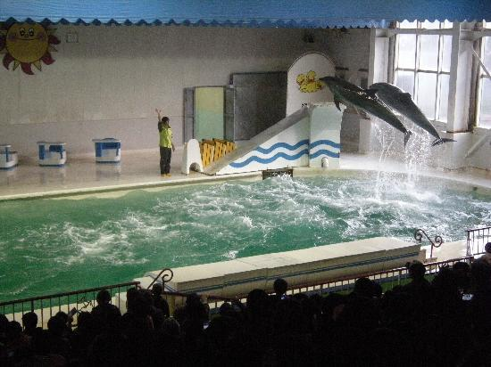 Otaru  Aquarium: おたる水族館の写真その2