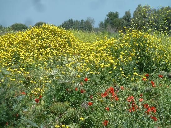 Penisola del Sinis - Isola di Mal di Ventre: Blumen