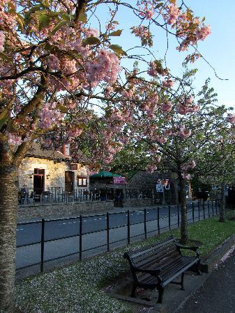 Fern Cottage Restaurant: In Bloom