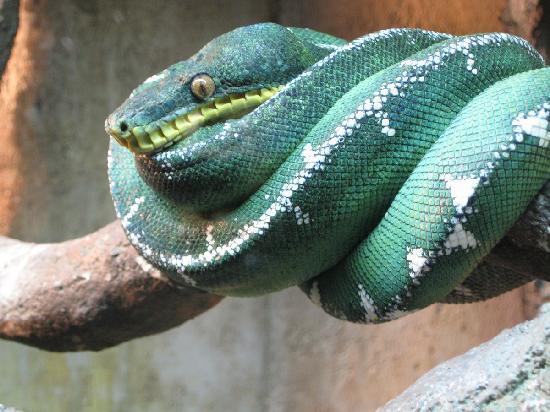 Cape Fear Serpentarium: Cool snake