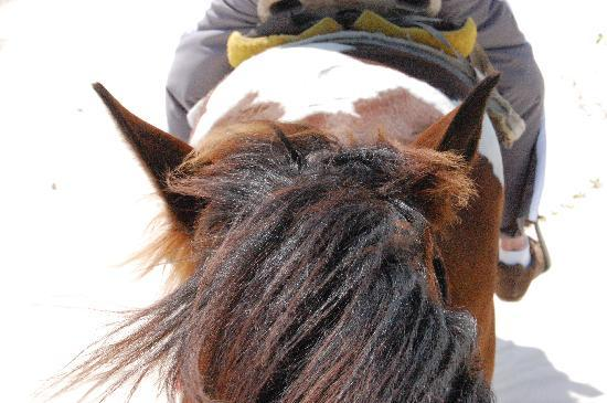 Rancho Baaxal: Chilango's beautiful ears