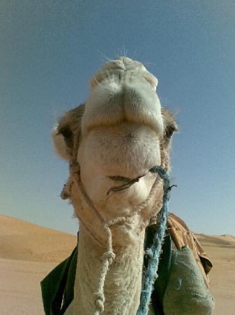 Algerian Sahara: ...the best friend of beduins !