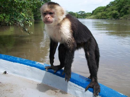 Issys Tours Costa Rica: monkey