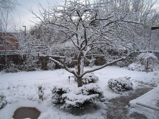 Summerhill Manor Bed & Breakfast and Tea Room: Winter Garden