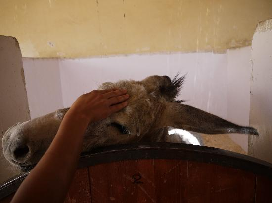 ACE- Animal Care in Egypt: Enjoying a little attention