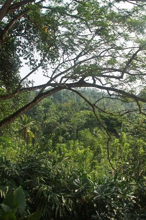 Kahanda Kanda: Views