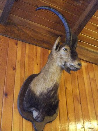 Los Jamones Restaurant: ciervo
