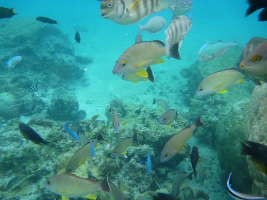Ile Des Pins, New Caledonia: たくさんいます
