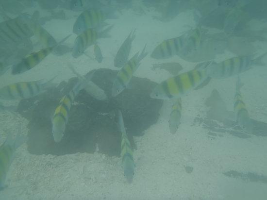 Krabi Fullmoon Tours: fish !!