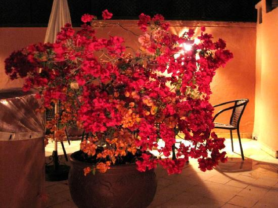 Riad Nerja: bougainville at roof terrace