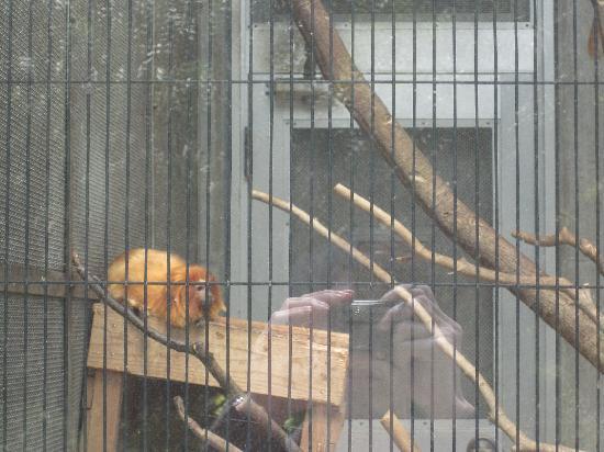 Hamamatsu City Zoo: 日本唯一