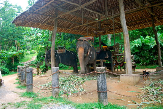 KokChang Safari Elephant Trekking: They keep the chairs on them all day--other place i went to did not.