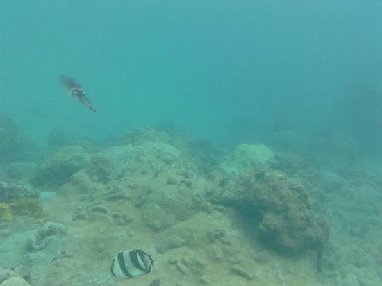 Tobago Princess Day Cruiser: Reef Squid at Arnos Vale Reef