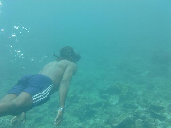 Tobago Princess Day Cruiser: Nathaniel - Free Diving