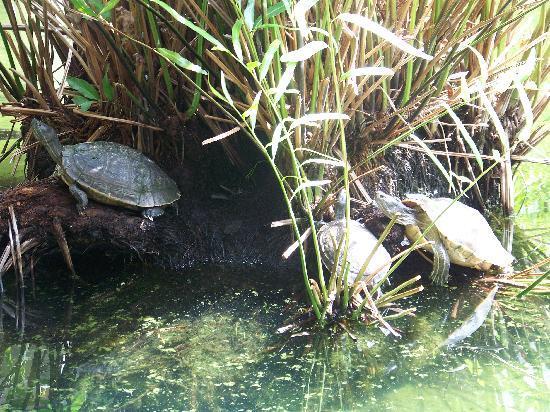 Piscina para tortugas fuera de la habitacion photo de for Piscina para tortugas