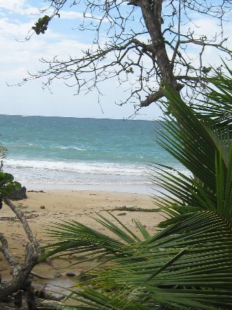 Bocas Town, Panama/Panamá: Red Frog Beach is nice, pass on the food unless you have no tastebuds.