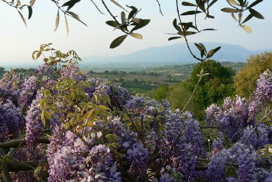 La Cardoncina: PANORAMA