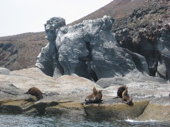 Dos Mundos: Sea lions