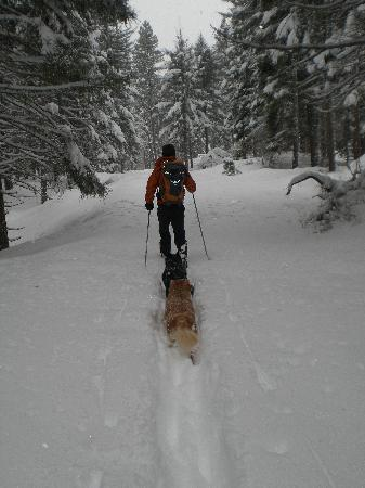 Mt Adams Lodge at the Flying L Ranch: Snowshoeing nearby