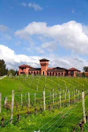 Marlborough Region, New Zealand: Highfield Estate Wines
