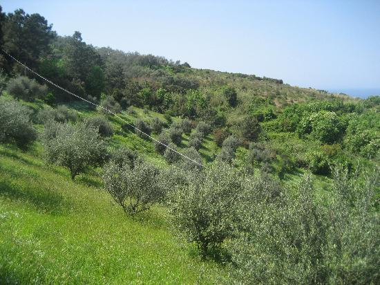 La Dolce Vita: Olive groves on the trail