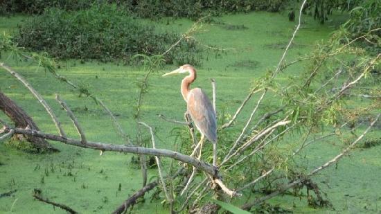 Pinckney Island National Wildlife Refuge: Plenty of beautiful birds at Ibis Pond