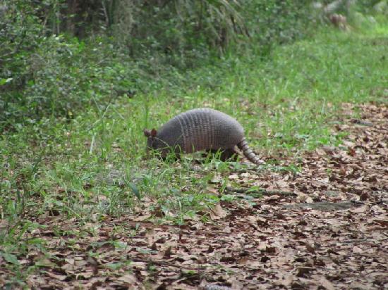 Hilton Head Island Wildlife Preserve