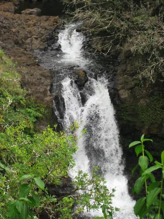 Wild Orchid Tours : newly named turtle back falls