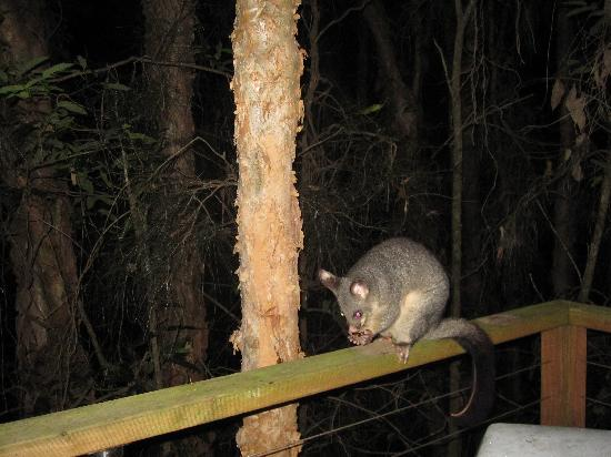 Wanderers Retreat: One of our night time visitors