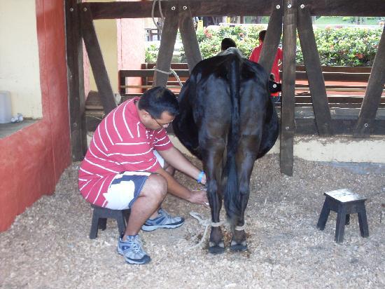 Decameron Panaca: Interactuando con los animales