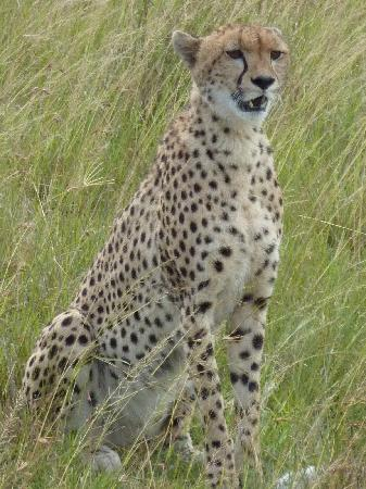 Mara Intrepids Luxury Tented Camp : Looking for Lunch