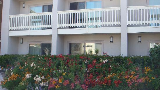 Best Western Plus Monterey Inn: Outside the hotel, flowers in spring!