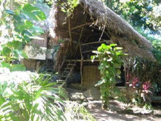 Los Naranjos Retreat : Casa Nido is an open palapa that allows you to live in harmony with paradise.