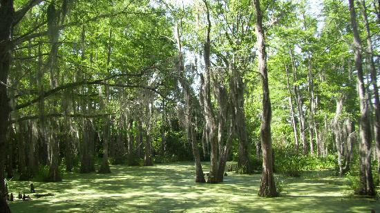 Pearl River Eco Tours : swamp tour #1