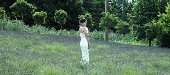 Lavender Hill: Wedding image in Laveneder fields