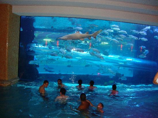 Aquarium And Pool Picture Of Golden Nugget Hotel Las Vegas Tripadvisor