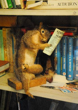 Frankfort, KY: Learning squirrel is learning