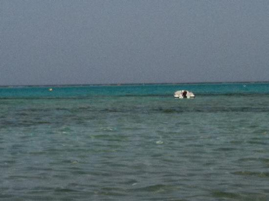 Marsa Alam, Egypt: mare..