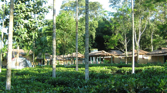 Nature Hunt Eco Camp, Kaziranga National Park: Nature-Hunt Eco Camp Kazaringa